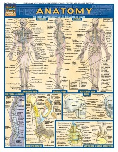 ANATOMY QUICK GUIDE