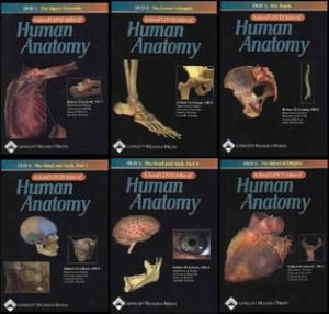 acland anatomy