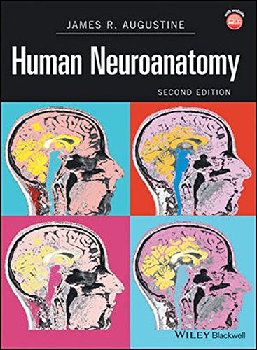 Neuroanatomy Through Clinical Cases Second Edition Pdf